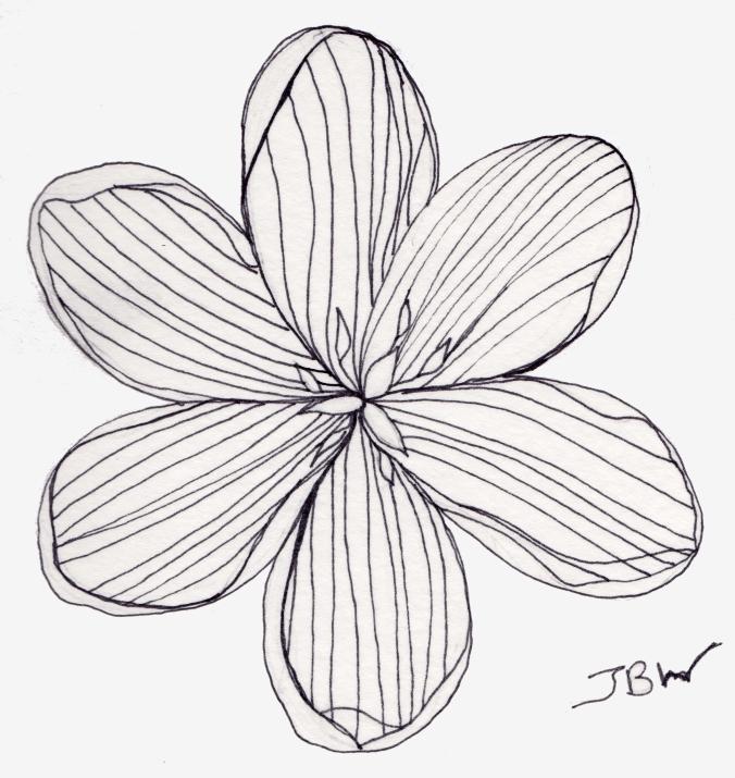 Tulip - Pen #112