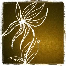 #39 White Flower