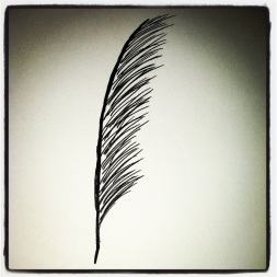 #41 Feather