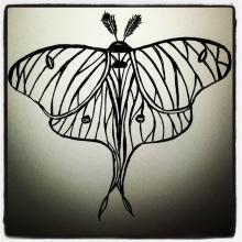 #58 Moth