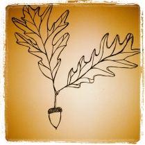 #113 Acorn and Leaves