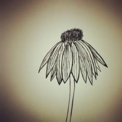#124 Echinacea