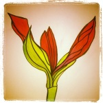 Amaryllis - Unfolding - Watercolor with Pen #17