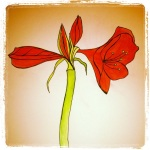Amaryllis - Almost There - Watercolors with Pen #18