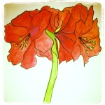 Amaryllis - Bloom - Watercolors with Pen #19