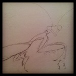 Praying Mantis – Sketch #21
