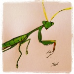 Praying Mantis - Watercolors & Ink #22