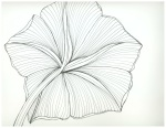 Otherside of a Moon Flower Bloom - Pen and Ink 56