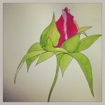 Peony – Bud Opening – Watercolor and Pen #36