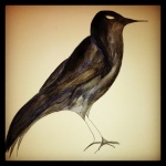 Crow – First Layer of Color #47