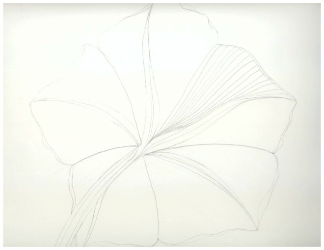 Otherside of a Moon Flower Bloom - Sketch