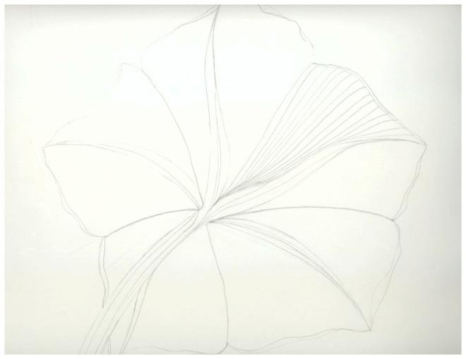 Otherside of a Moon Flower Bloom - Sketch