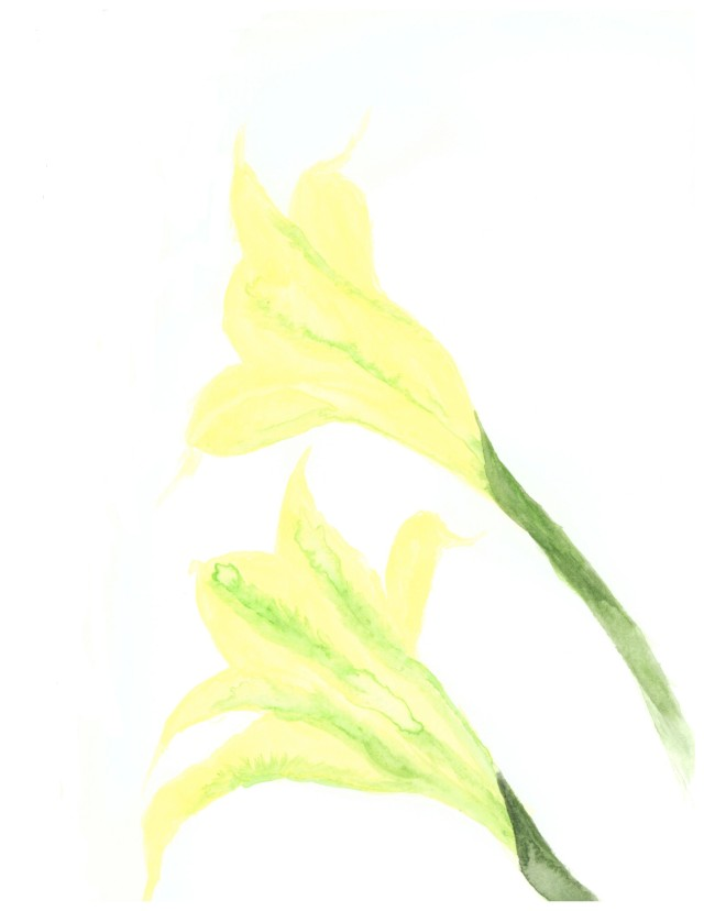 2 - Night blooming gladiolus