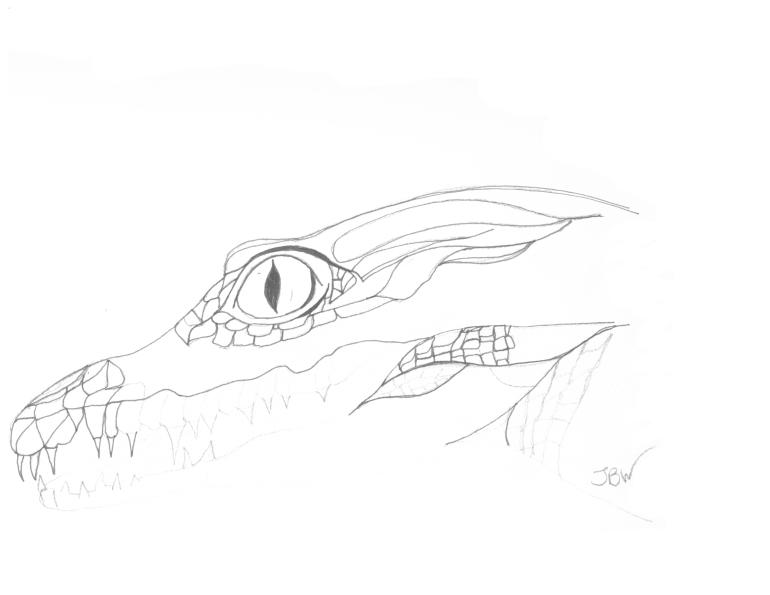 Beginnings of a Crocodile #85