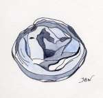 A Bluish Seashell (Underside) – Watercolor and Pen #96