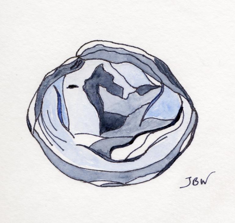 A Bluish Seashell #108