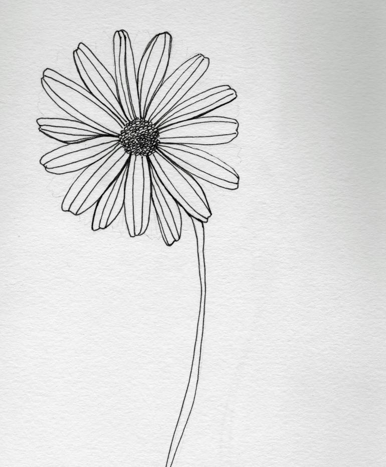 Daisy #98