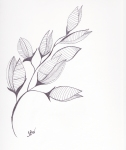 Empress Tree Seed Pod – Pen and Ink #88