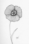 Mariposa Lily – Pen and Ink #89