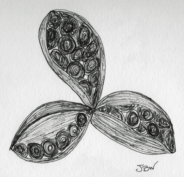 Peony Seed Pod #97