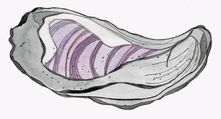 Seashell - watercolor #104
