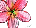 Tulip (Past Bloomed) – Watercolor with Pen #101