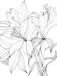 Lilies – Pen and Ink #125
