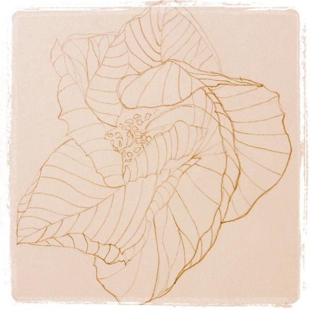 Hibiscus Closing – Pencil Sketch #18 (Series 3)