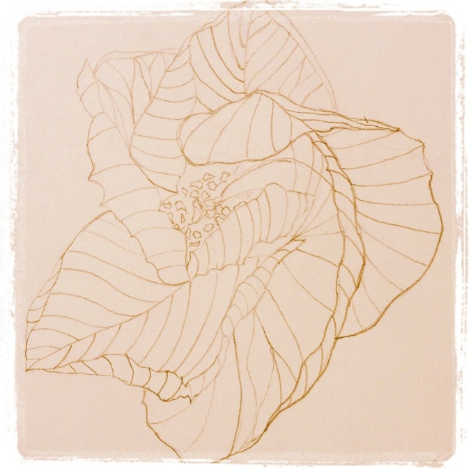 Hibiscus Closing – Pencil Sketch #18 (Series 3)